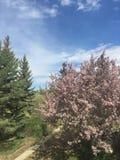 Back yard. Spring in back yard Stock Photo