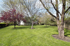 Back yard in spring. Back yard of luxury home in spring Stock Photography