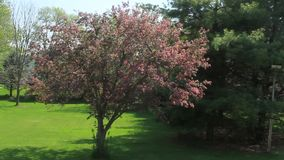 Back yard spring stock video