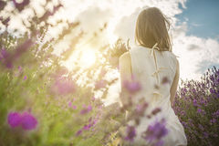 Back of young slim girl through lavender flowers. Evening on the lavender field. Enjoy the summer! unrecognizable portrait Royalty Free Stock Photos