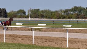 Racing Horse Fast Trot In A Race On A Track. Backa Palanka ; Serbia ; 09/27-29/2019. Studs Karadjordjevo ;   Serbian Cup Harness horse- Racing Horses Trots On A stock video