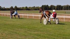 Racing Horse With A Jockey On A Track. Backa Palanka ; Serbia ; 09/27-29/2019. Studs Karadjordjevo ;   Serbian Cup Harness horse- Racing Horses Trots On A Track stock footage
