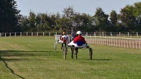 Racing Horse With A Jockey On A Track. Backa Palanka ; Serbia ; 09/27-29/2019. Studs Karadjordjevo ;   Serbian Cup Harness horse- Racing Horses Trots On A Track stock video footage