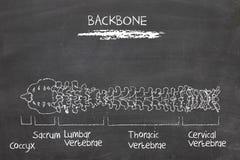 Backbone stock afbeelding