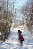 backcountry组滑雪者 免版税库存照片