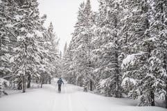 backcountry σκιέρ Στοκ εικόνες με δικαίωμα ελεύθερης χρήσης