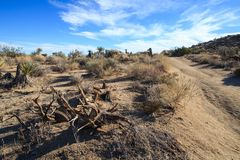 Backcountry road in the desert. Backcountry dirt road in the Mojave desert. Image taken in the Joshua Tree National Park, California royalty free stock image