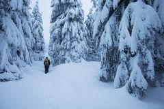 Backcountry hiker pushing through the fog on a snowy slope. Ski touring in harsh winter conditions. Ski tourer sporting royalty free stock image