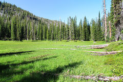 Backcountry Meadow in the Eagle Cap Wilderness, Oregon, USA. This meadow is actually a seasonally dry lake, with very wet soil and wetland-adapted vegetation Royalty Free Stock Photography