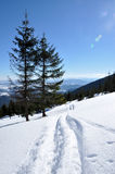Backcountry ski tracks Royalty Free Stock Photo