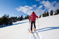 Backcountry skier. Young male backcountry skier moving up in a snowy woods of pine Royalty Free Stock Images