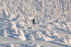 Backcountry-Skifahrer, der in Richtung zu einem Schnee bedeckten Weihnachtsbaumwald auf einem schönen sonniger Tagskifahrer abwär lizenzfreie stockfotos