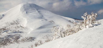 Backcountry skiing in Niseko Royalty Free Stock Photo