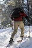 Backcountry Snowshoeing Royaltyfria Foton
