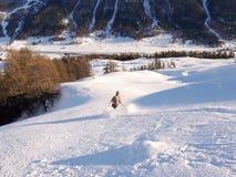 Backcountryskiër die in vers poeder aan de valleibodem door bos ski?en in de winter in de Zwitserse Alpen royalty-vrije stock fotografie