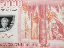 Approach to reverse side of chilean banknote of 5000 pesos, background and texture. Backdrop for announcements of trading and exchange, bank and commerce, price stock photo