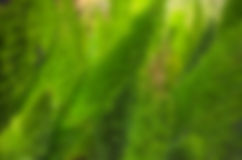 Backdrop blur green pine leaf background Royalty Free Stock Photo