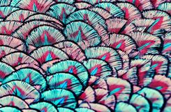 Backdrop of bright, colorful pattern of feathers wondrous fabulo Royalty Free Stock Photo