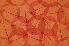 Backdrop of colorful floral leaves Stock Images