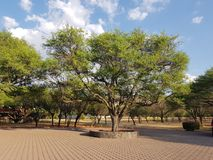 Park with trees on a sunny day with blue sky and white clouds. Backdrop for environmental and nature ads, ecology and ecosystem care, green leaves and foliage royalty free stock images