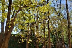 Temperate forest trees in a park. Backdrop for environmental, nature and botanical ads, flora and ecology care for a clean air royalty free stock images