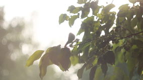 Backdrop of Green Leaves Background with Sun Light Bright stock footage