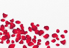Free Backdrop Of Rose Petals Isolated On A Transparent White Background. Valentine Day Background. Vector Illustration Royalty Free Stock Photos - 167006888