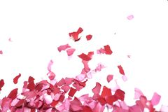 Many pieces of a torn pink rose corolla on white isolated background stock photo