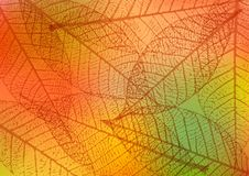 Backdrop with skeleton leaves. Autumn background. Vector illustration. Backdrop with skeleton leaves. Autumn background. Vector illustration Stock Photography
