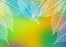 Backdrop with skeleton leaves. Autumn background. Vector illustration. Backdrop with skeleton leaves. Autumn background. Vector illustration Royalty Free Stock Image