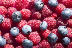 Raspberries and blueberries background with space for text Stock Photography
