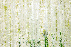 Backdrop for wedding white flowers. Beautiful white flower for wedding decoration Royalty Free Stock Images