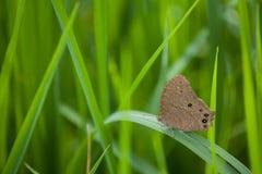 Backdround do campo de exploração agrícola da borboleta Imagens de Stock Royalty Free