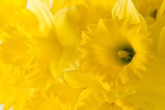 Backdround jaune Photo libre de droits