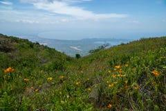 Backe med blommor som ner leder till sikten av sjön Nicaragua och de Granada öarna i rainforesten av Mombacho Royaltyfria Foton