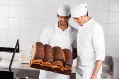 Backers Analyzing Bread Loaves In Bakery Stock Image