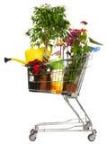 backetblommaväxter shoppar Arkivbild