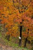 Backeträd med inget parkeringstecken Arkivbild