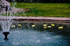 BackFountain con i fiori di galleggiamento Immagini Stock