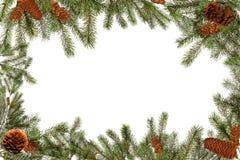 backg πράσινο λευκό δέντρων pinecones κλάδων Στοκ φωτογραφίες με δικαίωμα ελεύθερης χρήσης