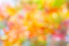 Backg för sommar för sommar för blomning för mjuk bokeh för orange guling rosa söt Royaltyfria Bilder
