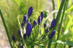 Backgarden-Fotografie Ladybyg Stockfotos