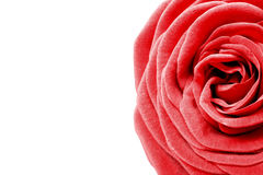 Backgorund de blanc de rose de rouge Photos libres de droits