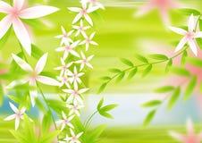 Backgorund de fleur Images libres de droits