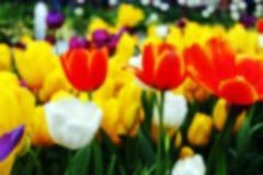 Backgorund de tache floue de fleur images stock