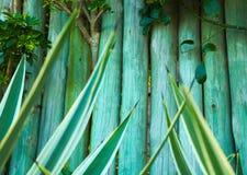Backgorund en bois avec des usines sur la couleur verte Photos libres de droits
