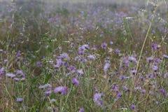 Backgound με τα φυσικά λουλούδια Στοκ Εικόνες