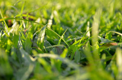 Backgound запачканной травы Стоковые Фото