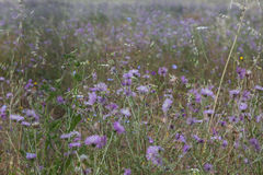 Backgound с естественными цветками Стоковые Изображения