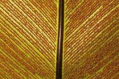 Backgound - Bird-nest el helecho y la espora fotografía de archivo libre de regalías
